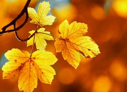 Mùa thu lá bay - Phong Thủy Trọng Hùng