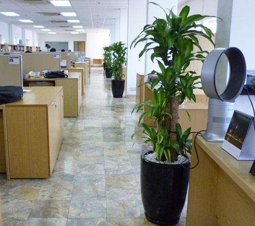 Đặc trưng của Tiểu Mộc là cây lá nhỏ và có màu xanh lá cây