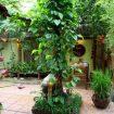 Cây trồng trước nhà – Phong thủy Trọng Hùng