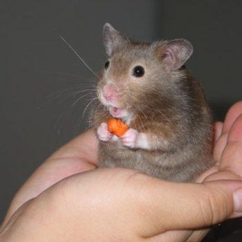 Tuổi con chuột – Phong thủy Trọng Hùng