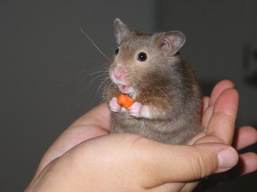 Tuổi con chuột - Phong thủy Trọng Hùng