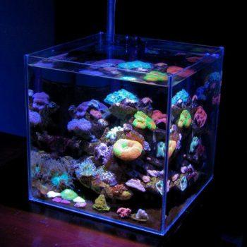 phong thủy bể cá – phong thủy trọng hùng