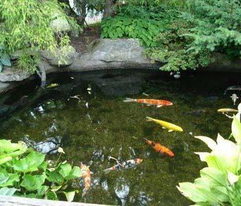 phong thủy sân vườn – phong thủy trọng hùng