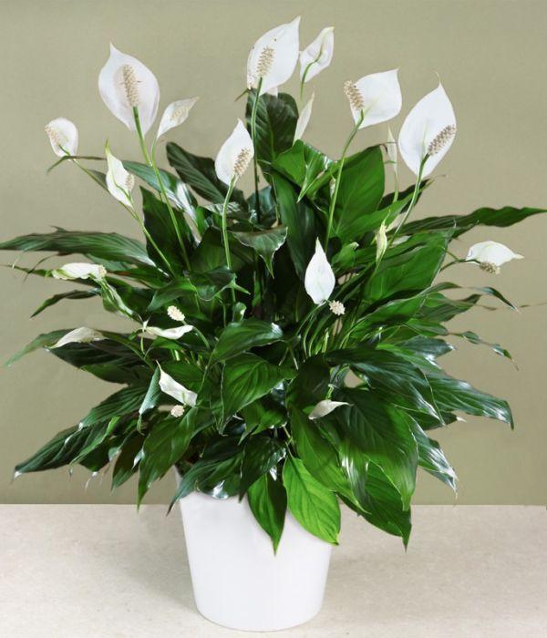 hoa phong thủy - phong thủy trọng hùng