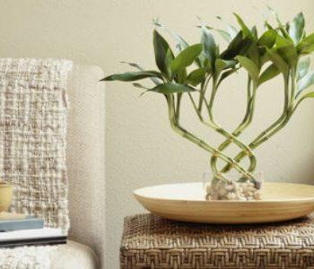 cây phong thủy – phong thủy trọng hùng