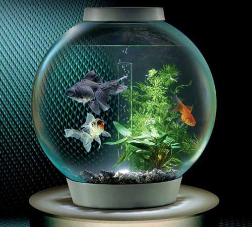 bể cá phong thủy - phong thủy trọng hùng