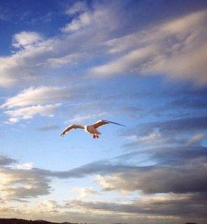 bát tự – phong thủy trọng hùng